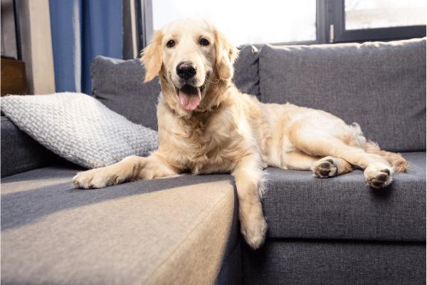 pelo-perro-en-el-hogar